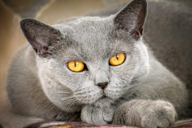 Kot – domowy lekarz