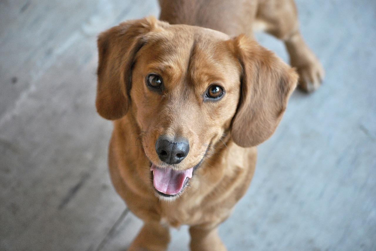 Pies – najlepszy przyjaciel